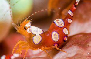 sexy shrimp thor